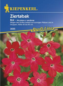 Nicotiana x sanderae Ziertabak rot